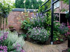 Small romantic urban garden with lots of flowers. Kleine romantische tuin