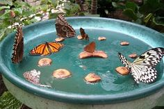 DIY: Butterfly feeder- who doesn't want to attract butterflies to their backyard? Butterfly Feeder, Diy Butterfly, Butterfly Species, Butterfly Plants, Butterfly Bush, Monarch Butterfly, Flowers To Attract Butterflies, Flowers Garden, Dream Garden