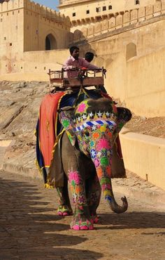 JAIPUR: An india elephent has finished carriring a touist from foot of the hill to Amber fort and now she returns back to rest. India By Alika Places Around The World, The Places Youll Go, Places To Go, Indian Elephant, Elephant Love, Varanasi, Rishikesh, In China, Nova Deli