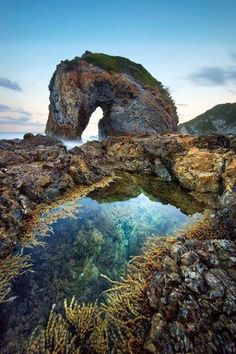 Sea Horse, Bermagui, New South Wales, Australia