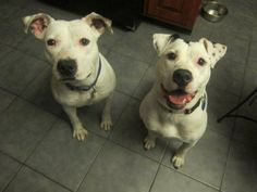 Willow was rescued from the NYACC October 2012 and it wasn't before long that she found the perfect home that winter. Recently, we received notice that Willow's adoptive mama passed away. Willow is now back in her original foster home finding...