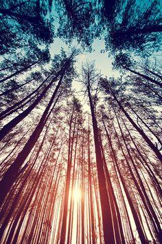 plasmatics-life: Forest ~ Sunset   By Mensent