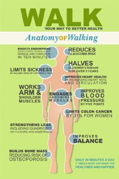 Anatomy of Walking From Leslie Sansone Walking For Health, Walking Exercise, Walking Workouts, Health Facts, Health And Nutrition, Health Tips, Health And Wellbeing, Health Benefits, Fitness Diet