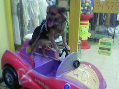 Learning to drive (Aprendiendo a conducir)