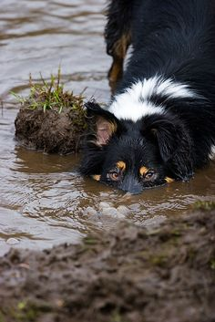 Border Collie - that ball's in here somewhere.