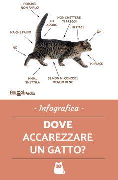 Capire il linguaggio del gatto è facile con le nostre infografiche! per esempio, sai dove toccare il gatto in modo da non farlo arrabbiare fargli così delle piacevoli carezze? Scoprilo su AnimalPedia! #animalpedia #cats #catlovers #catlady #catloversclub #gatto #gattino #linguaggiofelino #felinos #gatti