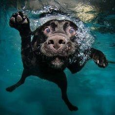 simpatiquísimos aun bajo el agua