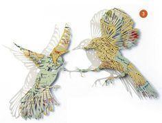 clairbrewster_mapbirds_SFGBTB_birds
