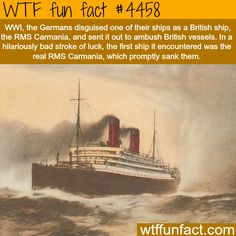 WTF Fun Facts is updated daily with interesting & funny random facts. We post about health, celebs/people, places, animals, history information and much more. New facts all day - every day! Wtf Fun Facts, True Facts, Funny Facts, Funny Memes, Random Facts, Crazy Facts, Odd Facts, Strange Facts, Random Stuff