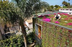 home with green roof