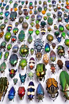 """""""The Beatles part 4,"""" by !Shot by Scott! via Flickr -- """"I had such a great opportunity today. idotasia let me have access to the 'beetle collection' in the Karlsruhe museum of natural history """""""