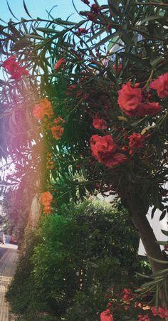 #duvarkağıdı #çiçek duvarkağıtları #duvarkagıdı #çiçekler Red