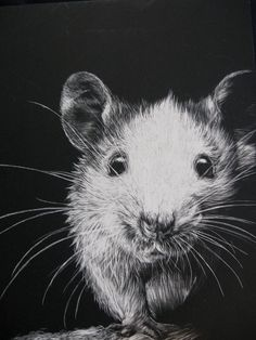 Caring for Your Pet Mouse - Annika L. - Caring for Your Pet Mouse for my future mousey babies! Animals And Pets, Baby Animals, Cute Animals, Scratchboard Art, Fancy Rat, Illustration Techniques, Scratch Art, Cute Rats, Pet Mice
