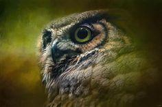 Зоопортреты. Великолепные фотографии!. Обсуждение на LiveInternet - Российский Сервис Онлайн-Дневников