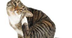 Sarna en gatos: causas, sintomas y tratamientos más efectivos