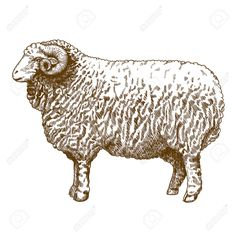 sheep illustration - Google Search