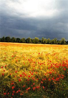 Weizen und Mohn in Gewitterstimmung