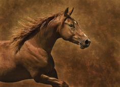 Product Categories Horses | Bentley Licensing Group