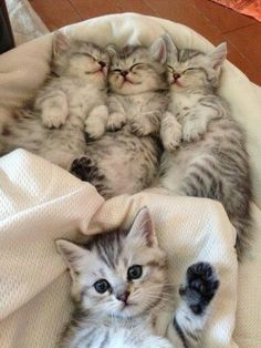Four simply adorable kittens! One of them wants to high five.