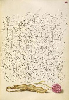 Joris Hoefnagel (illuminator) [Flemish / Hungarian, 1542 - 1600], and Georg Bocskay (scribe) [Hungarian, died 1575], Kidney Bean and English Daisy, Flemish and Hungarian, 1561 - 1562