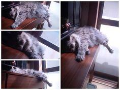 愛猫さくら姫 SHOOP+FACTORY(シュープ・ファクトリー)@オーナーブログ-130ページ目