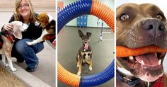 Please vote for Sachi. Vote for your favorite project that helps pups in need and a rescue could win $1,000 to make it happen! Boxer Rescue, Your Favorite, Pup, Shit Happens, Projects, How To Make, Blue Prints, Puppies, Tile Projects