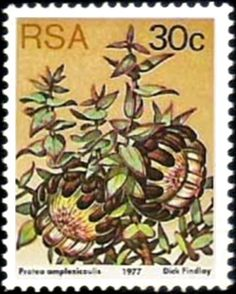 Protea amplexicaulus , (Sugarbushes) . South Africa 1977 Flower Stamp, Vintage Stamps, South Africa, Flora, Animals, Southern, Community, Collections, Natural