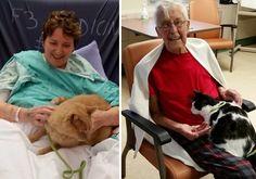 Has leído bien, el hospital canadienseJuravinski situado en Hamilton (Ontario) cuenta con un programa de visitas para mascotas que permite que los pacientes reciban a sus mejores amigos dentro del hospital. Te contamos cómo y por qué surgió la idea. #blog #mascotas #mascoweb #pacientes #hospital #visitas