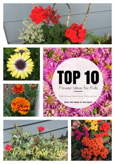 Our Good Life: Top Ten Flowers for Summer Color Garden Whimsy, Family Garden, Diy Garden Projects, Spring Has Sprung, Blooming Flowers, Gardening Tips, Organic Gardening, Growing Flowers, Summer Colors