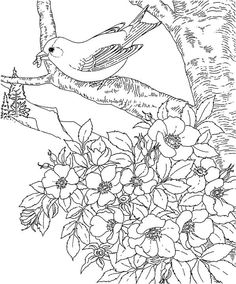 American Eastern Goldfinch Iowa State Bird Coloring Page