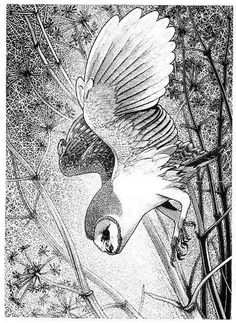 White Owl by Colin See-Paynton