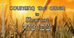 Counting begins from today (Firstfruits) for 50 days to Shavuot/Pentecost
