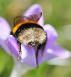Um post só com fotos de bundinhas de abelhas.
