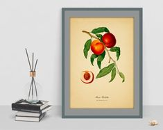 Watercolour Botanical wall art vintage print poster of Peach picture antique home print living room cubicle bedroom decor drawing wall art Botanical Wall Art, Cubicle, Print Poster, Vintage Prints, Watercolour, Bedroom Decor, Peach, Living Room, Antiques