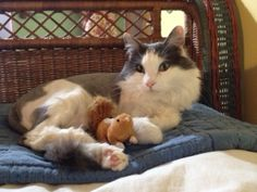 Bellakins getting ready to go to bed with her lil' Chipmunker Friend toy :)