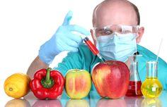 Alimentos transgénicos: um perigo real para a saúde!