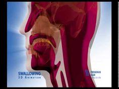 epiglote funcionamento - YouTube