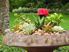 Hoe and Shovel: How to Create a Succulent Bird Bath