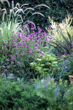 Gomphrena 'Fireworks' pink in center with Crithmum maritimum white umbel in center - perfect for zone 10