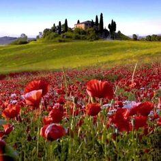 Travel to Italy with us #tuscany www.sognoitaliano.it