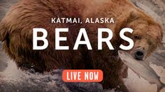 Lots of live webcams to explore on this website! Most from the Katmai National Park, Alaska