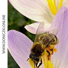 👉Czy znacie i lubicie internetowe challenge?😲 Kojarzycie akcje, jak Movember czy ALS Ice Bucket Challenge, które angażowały miliony i budowały świadomość problemów zdrowotnych czy społecznych? Teraz mamy dla Was propozycję zaangażowania się w pomoc ginącym pszczołom.🐝 W skrócie chodzi o to, aby w swoim ogrodzie, na tarasie lub balkonie zasadzić roślinę przyjazną pszczołom, zrobić zdjęcie albo film i opublikować go w swoich mediach społecznościowych z hashtagami #bee #friendly #plant.. Insects, Film, Animals, Movie, Animales, Film Stock, Animaux, Cinema, Animal
