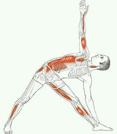 Músculos acionados