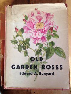 """Old Garden Roses"" by Edward Buyard"