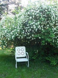 This would be great in the back yard: mock orange blossoms . they smell like orange blossoms and jasmine. these are native to the pacific northwest (non-invasive species), very delicate blossoms Mock Orange Bush, Beautiful Gardens, Beautiful Flowers, Outside Fall Decorations, Landscaping Along Fence, Moon Garden, Garden Oasis, Drought Tolerant Landscape, Woodland Garden