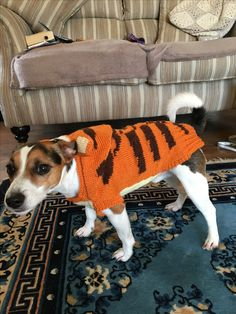 Tigger suit for a Jack Russell