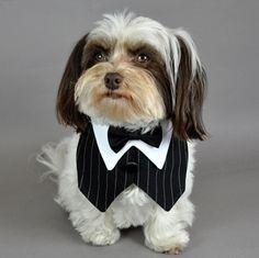 Business Pin Stripe Vest & Black Bowtie Set