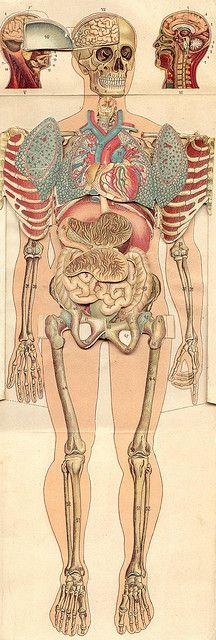 Mejores 67 imágenes de ANATOMIA en Pinterest | Anatomía, Anatomía ...