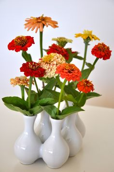 Zinnias -- Planted Hart State Fair Mix in July. End of August budding. Very tall variety. Planted too late. Must plant earlier. Didn't flower till late Sept./Oct. and then it was too cool.