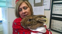 Betsy, my Therapy Rabbit, visiting a hospital:)